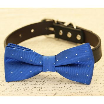 Royal Blue dog bow tie attached to collar, Pet wedding accessory