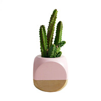 Taos Time Cactus Planter in Blush