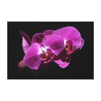 Pink Orchid Flowers Canvas Print