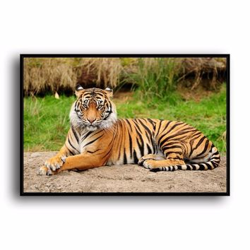 SR--0490 Bengal Tiger Natural Scenery Animal. HD Canvas Print Home decoration Living Room bedroom Wall pictures Art painting