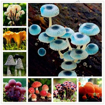 100pcs/bag Mushroom Seeds Succlent Plant Edible Health Vegetable Mushroom Seeds For Happy Farm Free Shipping