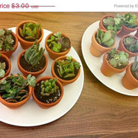 2 week sale Potted Succulent Wedding Baby Shower favors in Clay Pots
