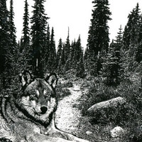 wolf in forest trees abstract landscape original art print nature wildlife black