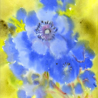 Blue Anemones, original watercolor painting, 16 X 12 in, pastel pale blue, electric blue floral art, flowers