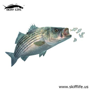 Striper Decal with Baitfish