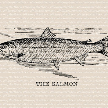 Salmon Illustration - Vintage Saltwater Fish Clip Art Image – Digital Stamp - Fishing Printable Transfer – instant download clipart - CU OK