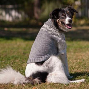 Ethical  Multi Crochet Dog Sweater