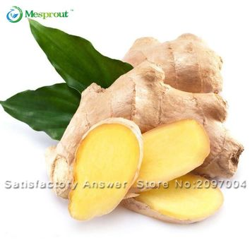 New 100 Pcs Ginger Seeds Vegetable seeds Balcony Vegetables Potted Bonsai Plant Seeds Four Seasons Zingiber Seeds Plants