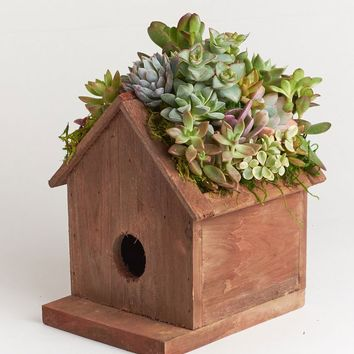 LIVE Succulent Birdhouse Planter Kit - Ships Alone