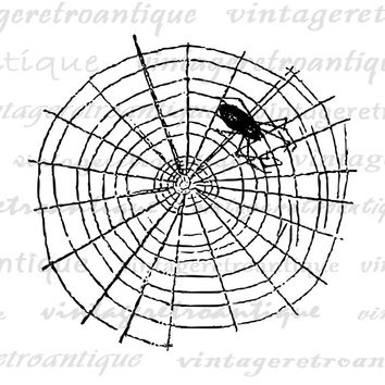 Printable Graphic Spider Download Spider with Web Artwork Digital Spiderweb Image for Transfers Pillows Tea Towels etc HQ 300dpi No.4617