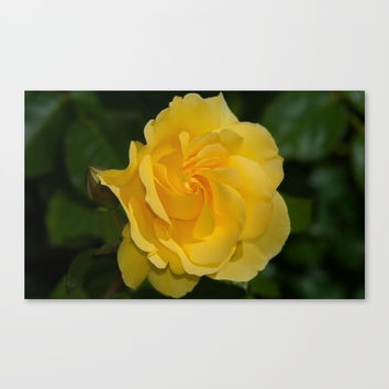 Sparkle & Shine Rose Canvas Print by Glenn Franco Simmons