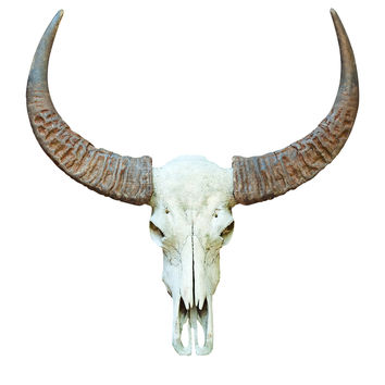 Seriously New Mexico Horn Bull Skull Decal
