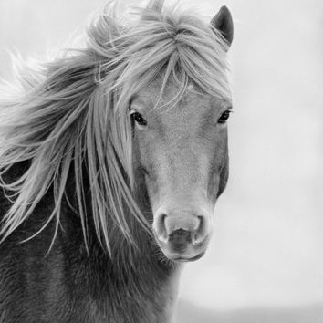 Wild Horse 11x14 Black & White Wildlife Photography, Animal Photography, Nature Photograph, Chincoteague Pony, Assateague Island, Equine Art