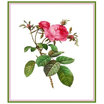 Pink Provence Rose Flower Inspired by Pierre-Joseph Redoute Counted Cross Stitch Pattern