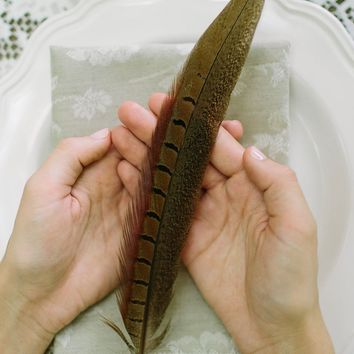 """Pack of 10 Real Ringneck Pheasant Feathers - 16""""-18"""" Tall"""