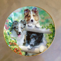 Sheltie Lover Gift, Collectible Sheltie plate, On The Fence Plate, Dog Lover Plate, Sheltie Dog, Sheltie Family Plate, Shetland Dogs