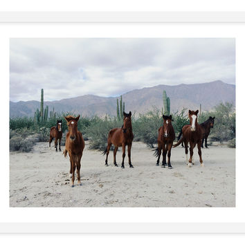 Kevin Russ, Horses in the Desert, Photographs