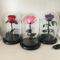 The Little Prince Glass Cover Fresh Preserved Rose Flower Immortal Colorful Roses for Girl Valentine's Day Wedding Gifts