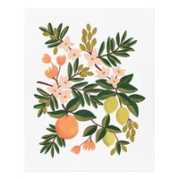 Citrus Floral Art Print by RIFLE PAPER Co. | Made in USA