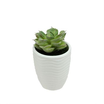 "4.5"" Decorative Green Echeveria Succulent Plant in a Wavy Ribbed White Pot"