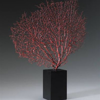 Red Sea Fan with Base design by Cyan Design