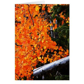 Orange Tree With Log, Blank Inside Card