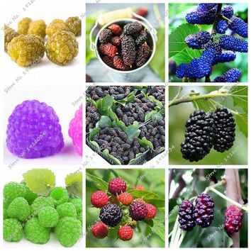Raspberry Seed Mulberry Black Berry Blackberry Seed Stratified Fruit, The Germination Rate 95% Bonsai Tree Seedling Seed 400 Pcs