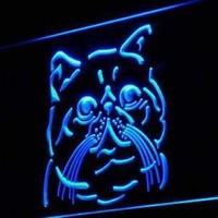 Exotic Shorthair Cat LED Neon Light Sign