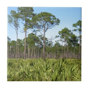 Trees and Saw Palmettos