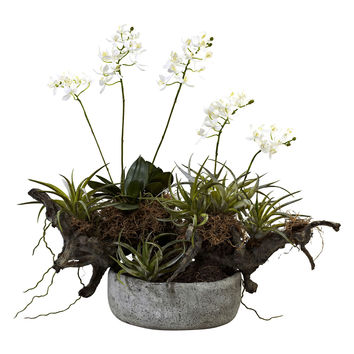 Orchid & Succulent Garden with Driftwood & Vase
