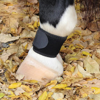 Professional's Choice Pastern Wrap