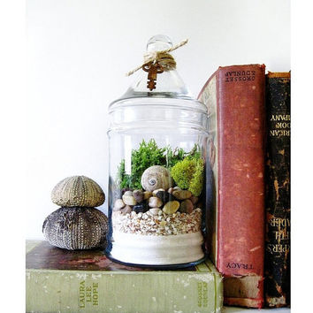 Live Plant Terrarium: Layered Beach Treasures Terrarium with Antique Skeleton Key
