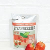 Urban Grow Pocket Grow Your Own Strawberries - Urban Outfitters