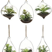 Set of 6 Hanging Glass Terrarium With Lifelike Artificial Succulents In Moss And Soil