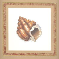 "Nutmeg Shell 10"" x 10"" custom matted lithograph"
