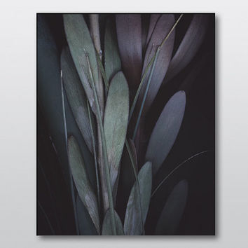 Large scale fine art print.Abstract close up photography.Contemporary purple green home decor.Botanical photography.Sizes from 4x6 to 30x40.