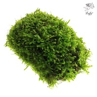 Luffy Coco Mini Moss, Hardy Plant, Provides Aquariums with Oxygen for Java Fish Exo Shrimp Moss Fern Terra Tank