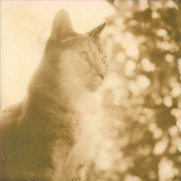 Portrait of a Feline - Polaroid Photography Art Print by Briana Morrison