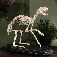 Pawing Articulated Cat Skeleton