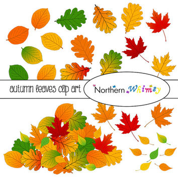 Autumn Leaves Clip Art Set – Fall Clipart - Back to School - oak, apple, poplar, and maple leaves in fall colors - instant download - CU OK