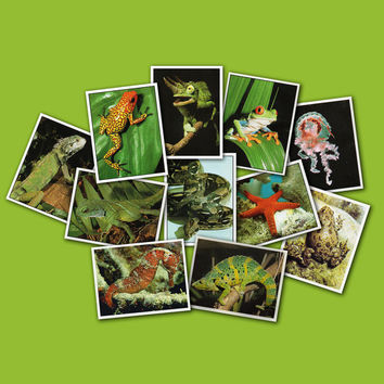 Reptiles and Amphibians - Set of 11 Vintage Full Color Transfer Stickers - Printed in Italy, 1990s