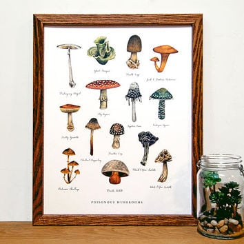 Poisonous Mushrooms Illustrated Chart | Botanical Mushroom Chart | Forest Wall Art