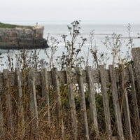Weathered Fence Photo Ocean View Nature and Wildlife Photo Print Matted Free Shipping 8x10