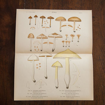 Large Mushrooms Fungi Plate 0