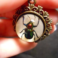 Round Rainbow Beetle Preserved Scarab Specimen Cameo Necklace