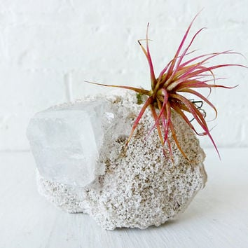 Air Plant Crystal Garden - Space Square India Mineral Island with of Pink Plant