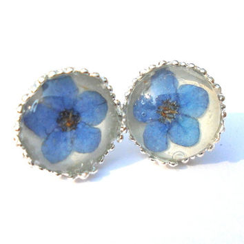 Real Forget-me-not Pressed FlowerSilver Plated Stud Earrings