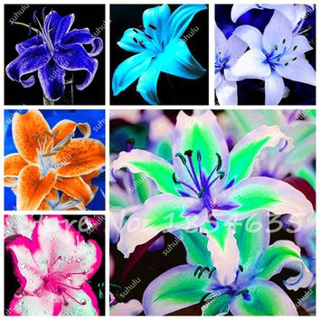 Plants Potted Lily Flower Seeds Flower Seed Lily Perfume Purify Indoor Bonsai Air Ornamental Plants for Home Garden-20 Pcs