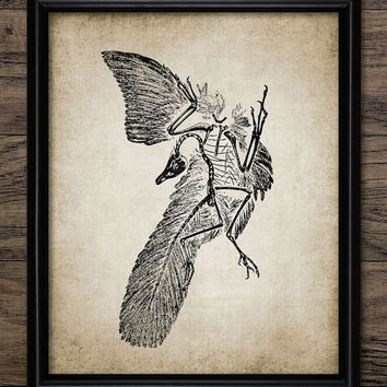 Vintage Archeopteryx Print - First Bird Illustration - Bird-Like Dinosaur - Feathered Dinosaur Fossil - Single Print #934 - INSTANT DOWNLOAD