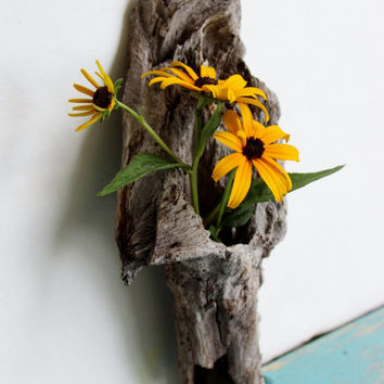 Natural Home Decor Driftwood Vase , Surf Tumbled Hollow Driftwood Sculpture , Reclaimed Wood Decoration for Air Plants